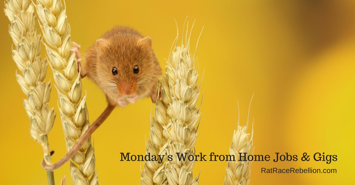 Monday's Work from Home Jobs & Gigs