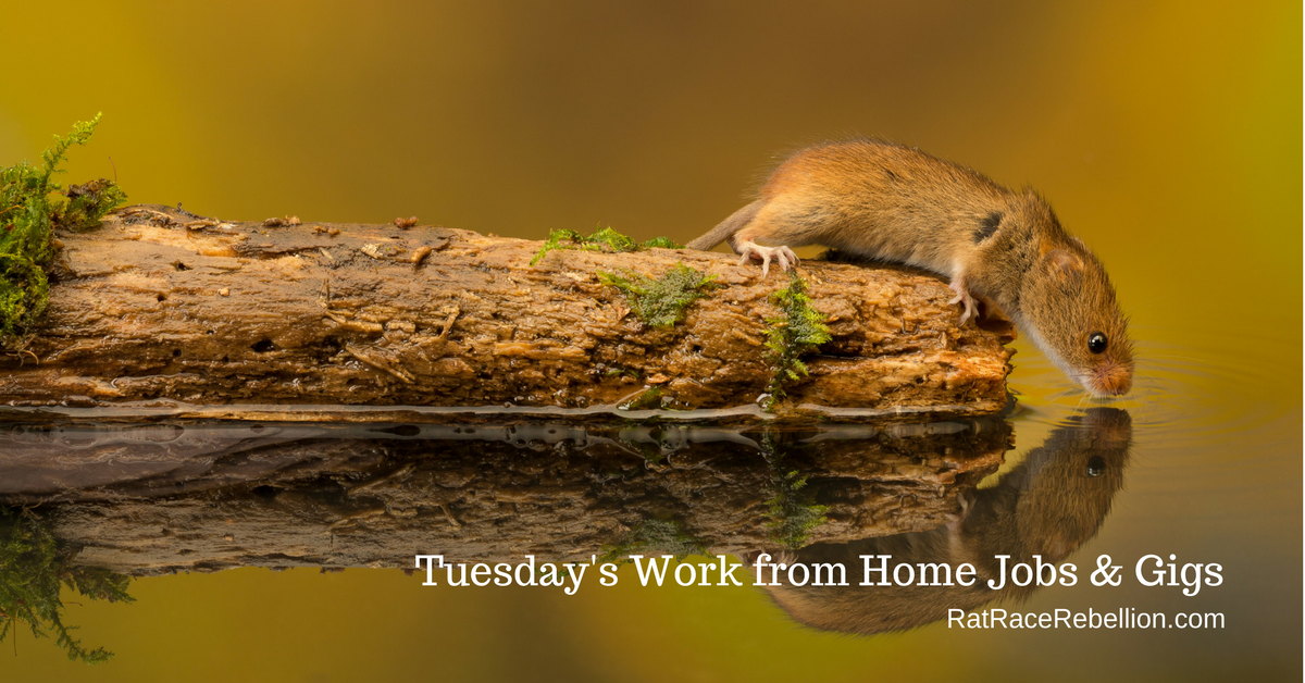 Tuesday's Work from Home Jobs & Gigs